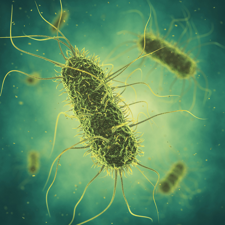 Salmonella, travelers' diarrhea